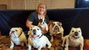 Bulldog Club of Denver Specialty Show 20017