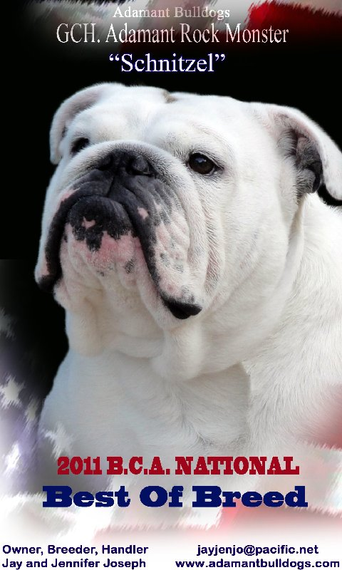 2010 Bulldog National Best of Breed