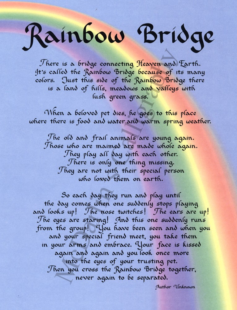 mommasbullies   rainbow bridge